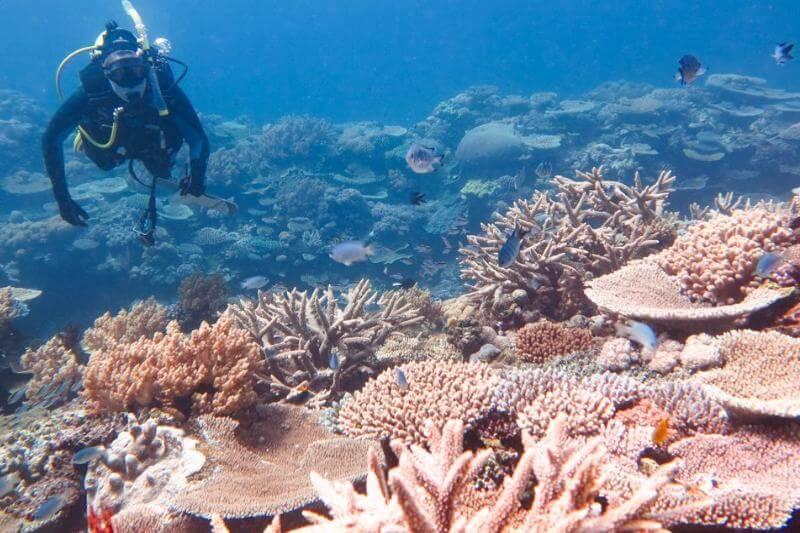 El arrecife padece un fuerteblanqueamientoprovocado por la subida de la temperatura del mar.