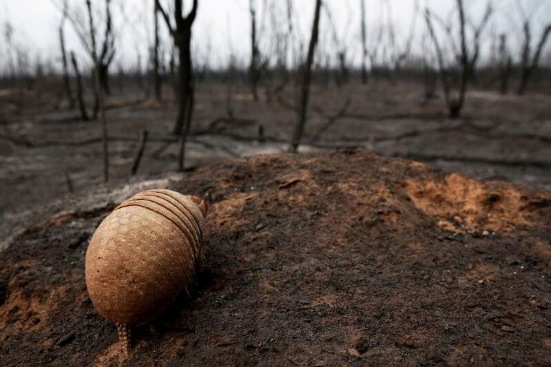 Más de 1,200 especies conviven en este bosque que se estima ya ha perdido 40 millones de árboles por los incendios.