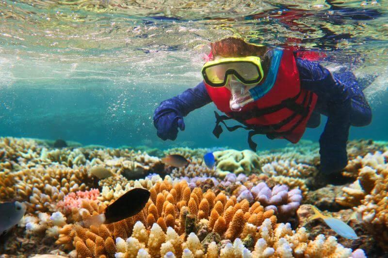 El acuario de Florida ha hecho historia científica cuando un grupo de corales se reprodujo con éxito dos días seguidos por primera vez en un laboratorio.