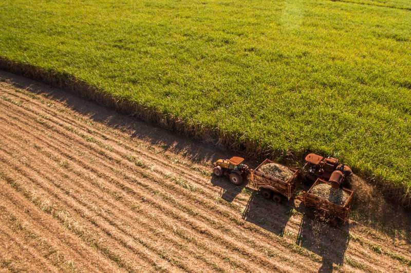 La Agencia Europea de Medio Ambiente proyecta que los impactos en la agricultura supondrá un 1% de pérdida del PIB para 2050.