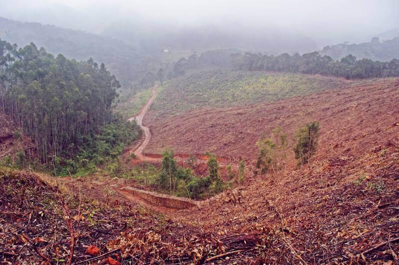 Un estudio revela que la tasa anual de desaparición de cubierta arbórea crece un 43% y alcanza más de 26 millones de hectáreas por año desde 2014.