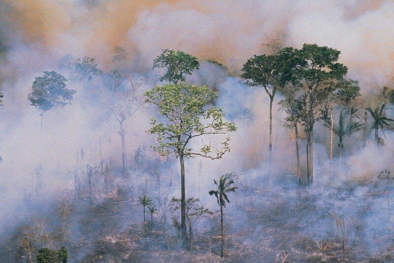 La mayor selva tropical del mundo perdió el mes pasado 1,698 km2 de cobertura vegetal, es decir, 526 km2 más que el mes del año pasado.