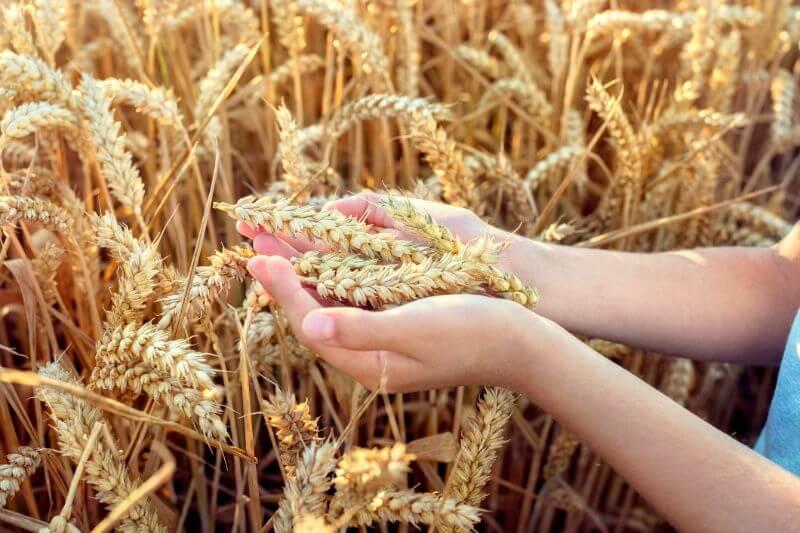 La excesiva dependencia mundial de ciertos alimentos básicos deja a las poblaciones vulnerables a las malas cosechas