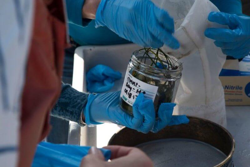 Se han encontrado microplásticos en el estómago de varios organismos marinos