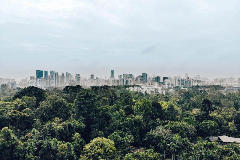 El tiempo de permanencia del carbono en los bosques terrestres se reduce cada año entre un 0.2 y un 0.3% en las últimas décadas.