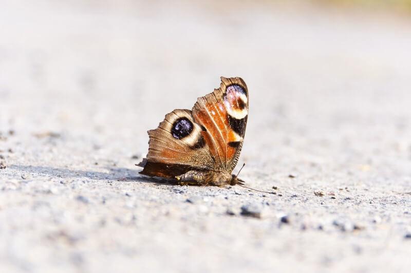 La mitad de todos los insectos pueden haberse perdido desde 1970 como resultado de la destrucción de la naturaleza y el uso intensivo de pesticidas.