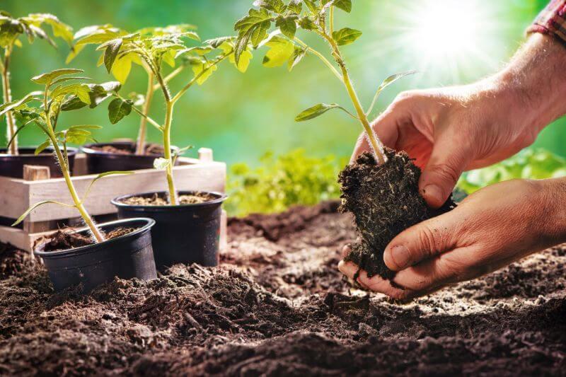 Las plantas pueden guardar información sobre cambios ambientales, lo que les permite preparar su organismo a dichos cambios anticipadamente.