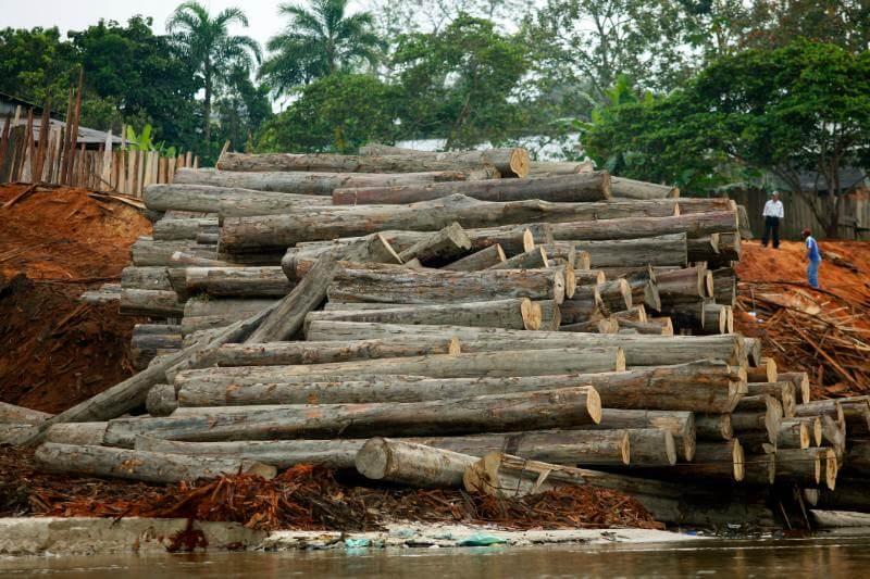 Se perdieron alrededor de 9,762 kilómetros cuadrados de selva tropical durante los 12 meses hasta julio de 2019