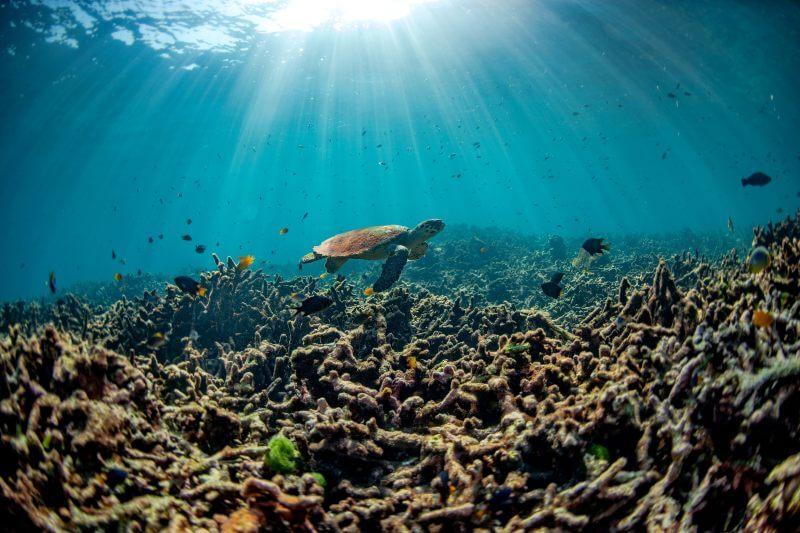 Desde Egipto hasta México podrían perder el 95% de sus ingresos del turismo de arrecifes de coral y África occidental un 85% sus pesquerías oceánicas.