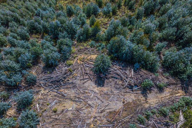 El país deberá reducir la deforestación para recibir este dinero de Noruega, Alemania y Reino Unido.