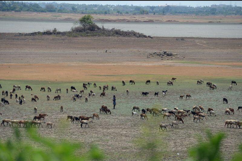 Casi el 67% del trigo, el 64% del maíz y el 19% del arroz podrían estar en áreas con estrés hídrico extremadamente alto para 2040.