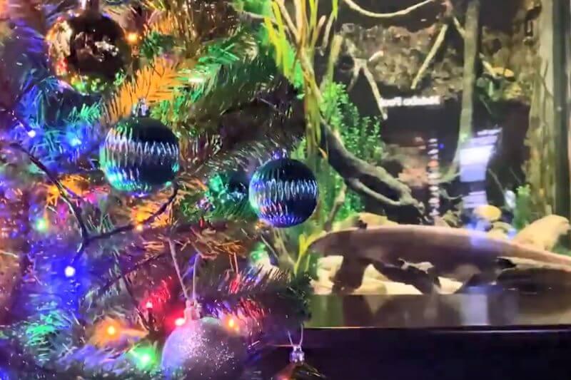 Un sistema especial conectado al acuario de Miguel permite que sus descargas den energía a las luces de un árbol cercano