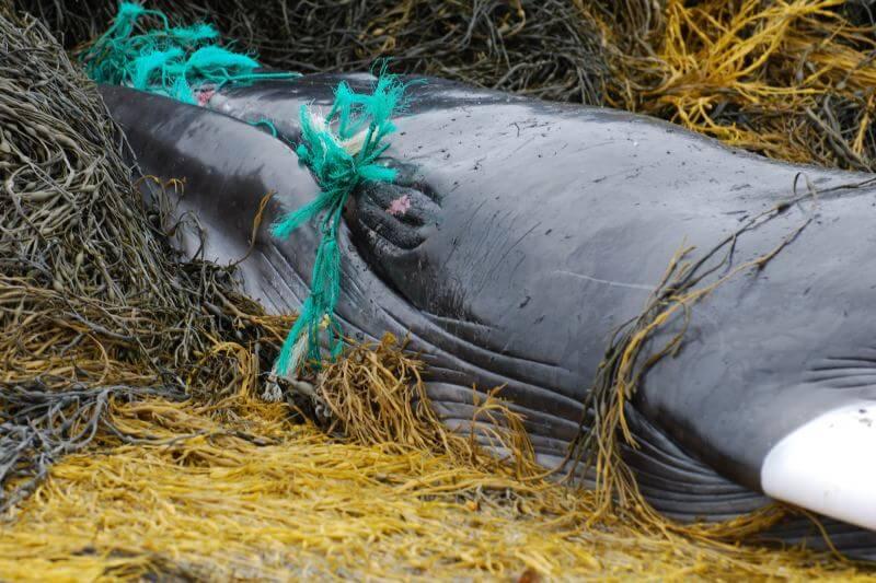 Greenpeace pide una acción global sobre redes, líneas y trampas de pesca que son mortales para la vida marina.