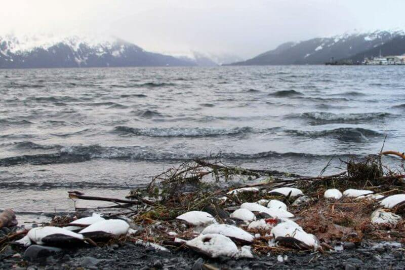 Según investigadores, la gota cálida causó una de las muertes masivas más grandes de la historia en menos de 12 meses.