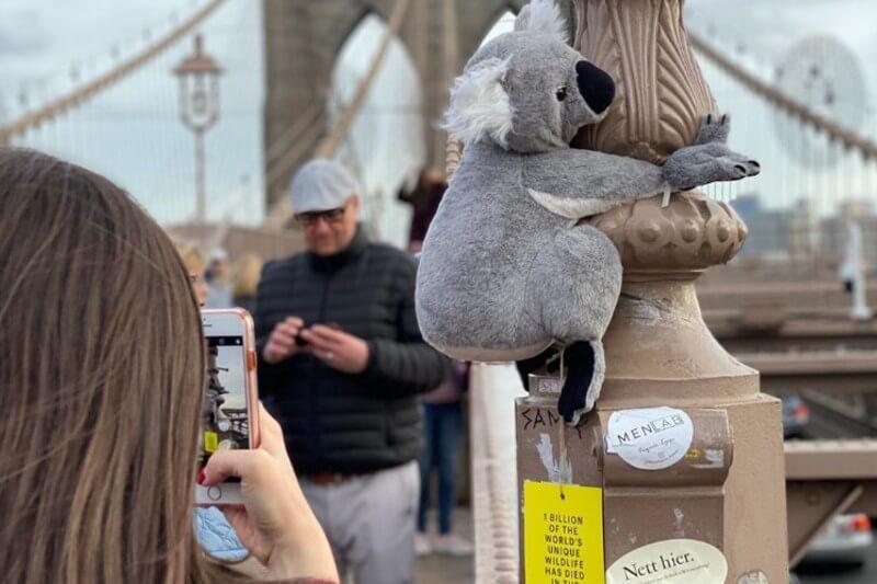 """Los peluches llevan una tarjeta colgando en la que se puede leer """"más de 1,000 millones de animales han muerto en los incendios de Australia""""."""