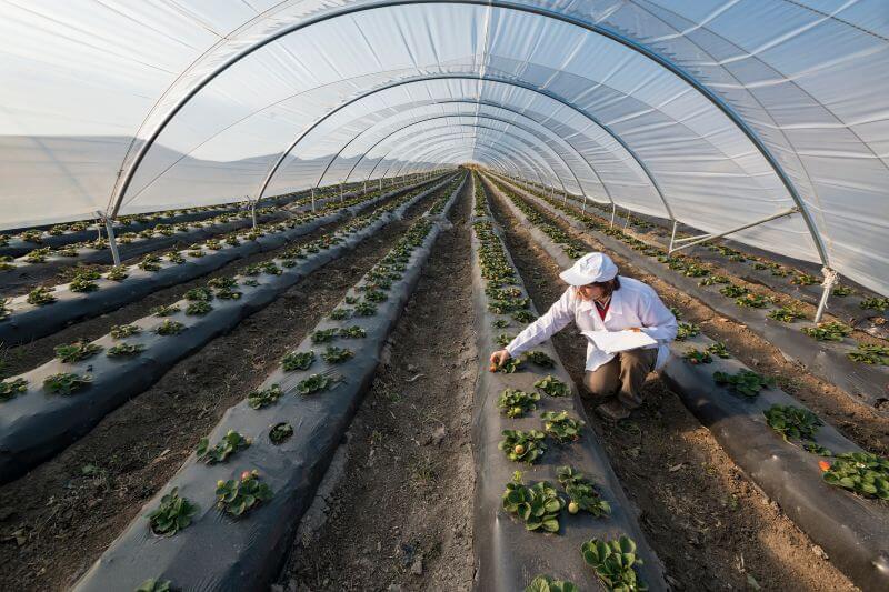 La ONU quiere poner en alto la importancia de proteger las plantas de enfermedades y plagas exacerbadas por el comercio, los viajes y el cambio climático.