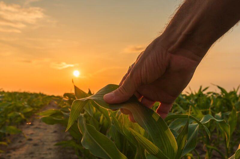 Un agricultor está experimentando métodos de agricultura orgánica y muestra que la conservación de la naturaleza es compatible con su explotación agraria.