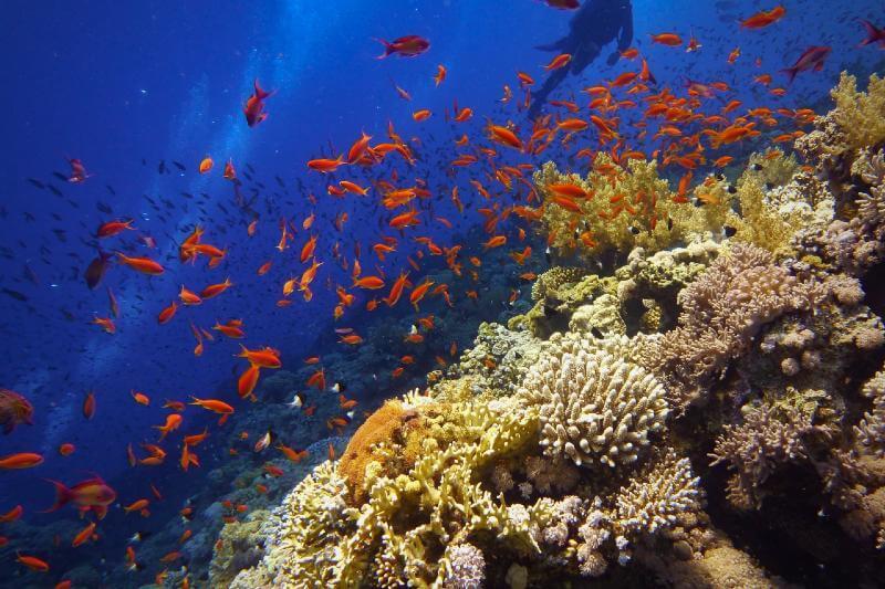 EL presidente de la Asamblea General lo anuncia como un momento crucial para la salud de la vida marina y terrestre.