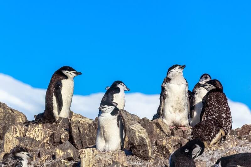 La cantidad de estos animales ha disminuido hasta en un 77% desde su última encuesta en la década de 1970.