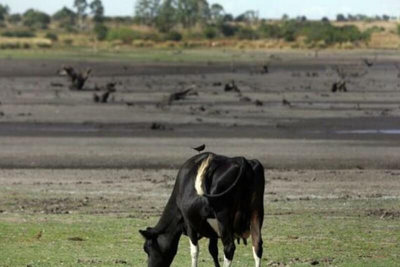 El Gobierno uruguayo pretende movilizar así unos ocho millones de dólares para apoyar a los sectores más afectados.