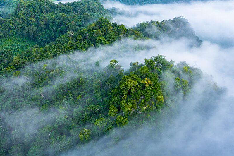 Una investigación sugiere que la Amazonía podría convertirse en fuente de emisión de carbono en la atmósfera para la próxima década.