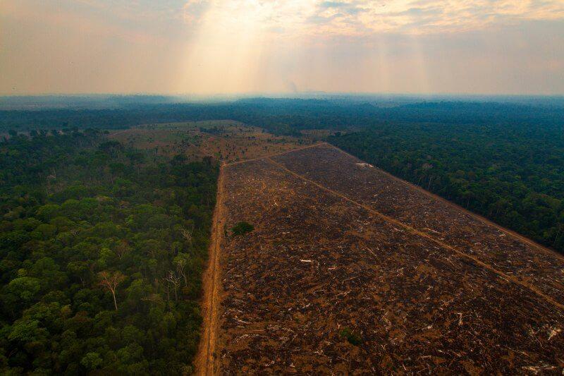 Brasil retrocede en la lucha contra crimenes ambientales