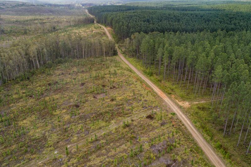 Pueblos indígenas se pronunciaron contra las decisiones de compañías multinacionales por reemplazar los bosques con plantaciones de soja, palma y ganado.