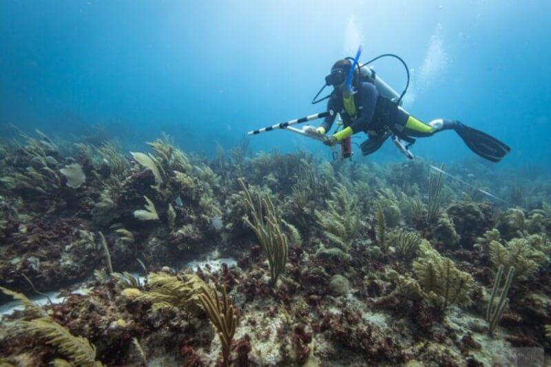La contaminación por desechos sólidos y aguas residuales son de las principales causas del mal estado de los arrecifes del país.