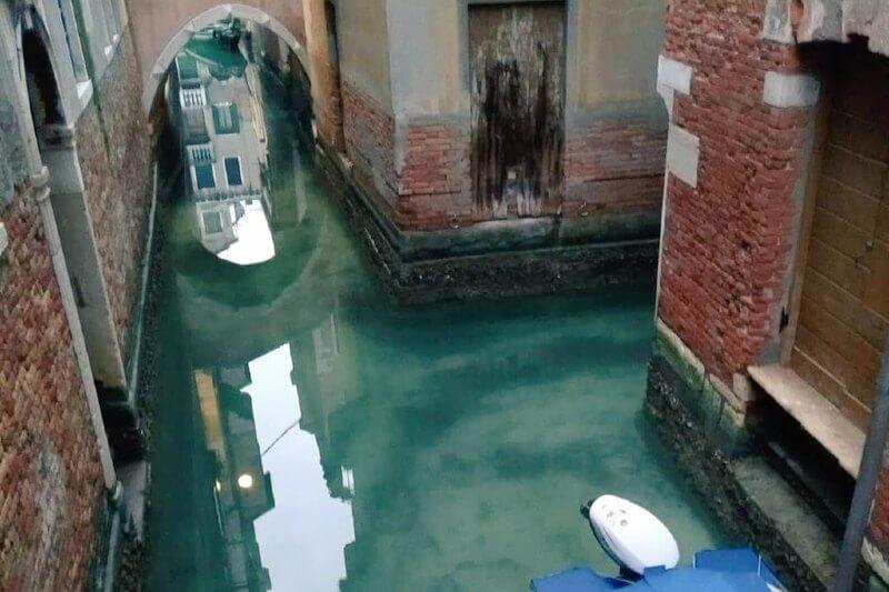 La reducción del paso de embarcaciones permite observar peces y otros animales en las corrientes de esa turística ciudad de Italia.