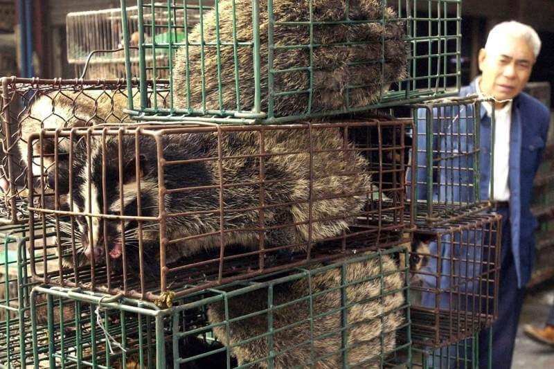 Se prohibe el comercio y consumo de animales salvajes en China.