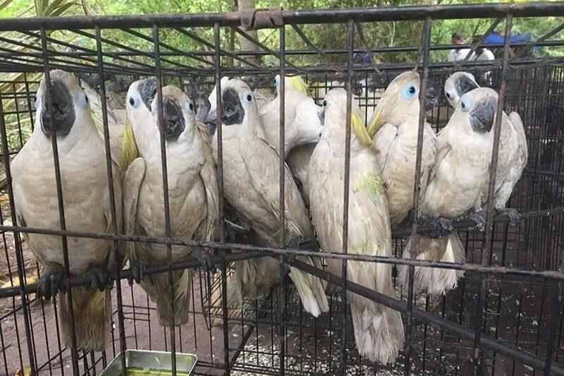 A pesar del coronavirus, continúa la venta ilegal de especies salvajes