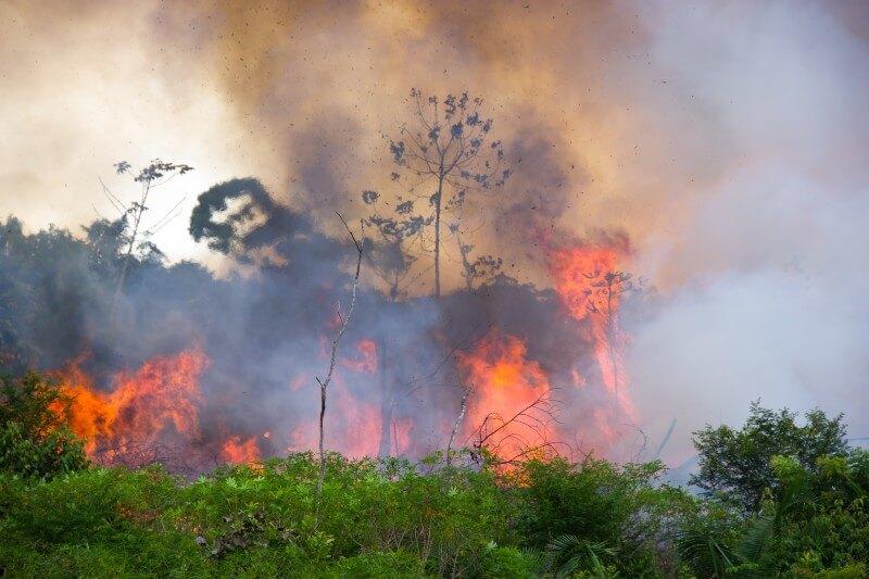 Deforestación en la Amazonía aumenta en marzo
