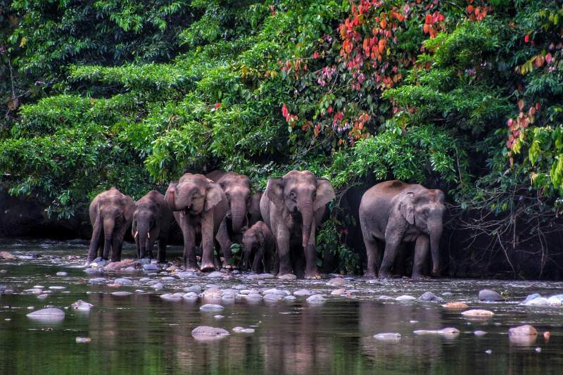 Escucha los sonidos reales de las selvas de todo el mundo