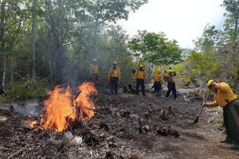 Se registran incendios forestales en Quintana Roo