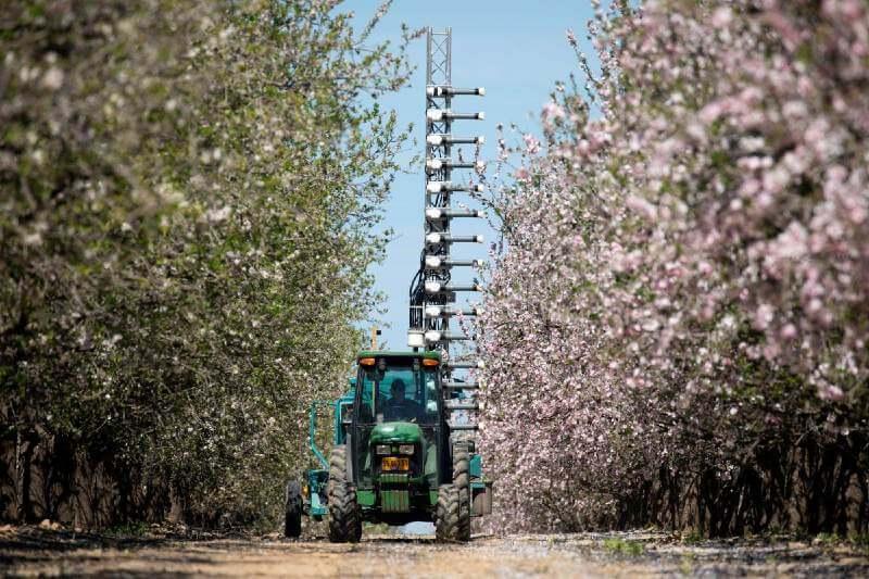A falta de abejas, Israel busca una nueva forma de polinización mecánica