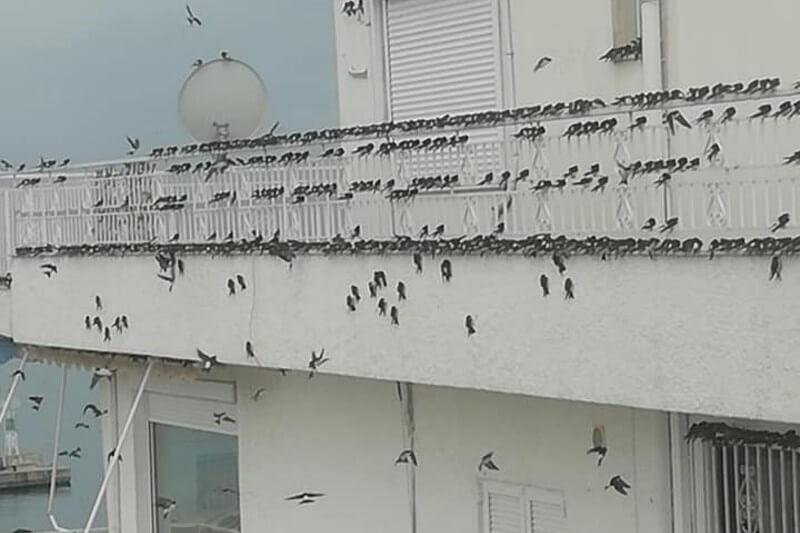 Miles de aves migratorias murieron por fuertes vientos en Grecia
