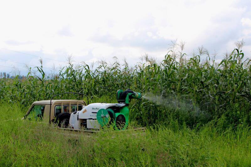 Plaga de chinches amenaza suministro de avellanas a nivel mundial