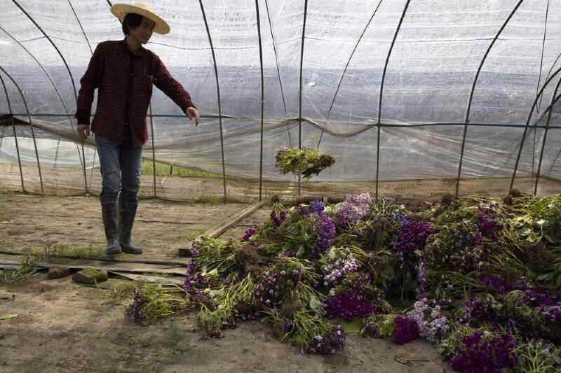 Agricultores de Wuhan pierden sus cosechas por cuarentena