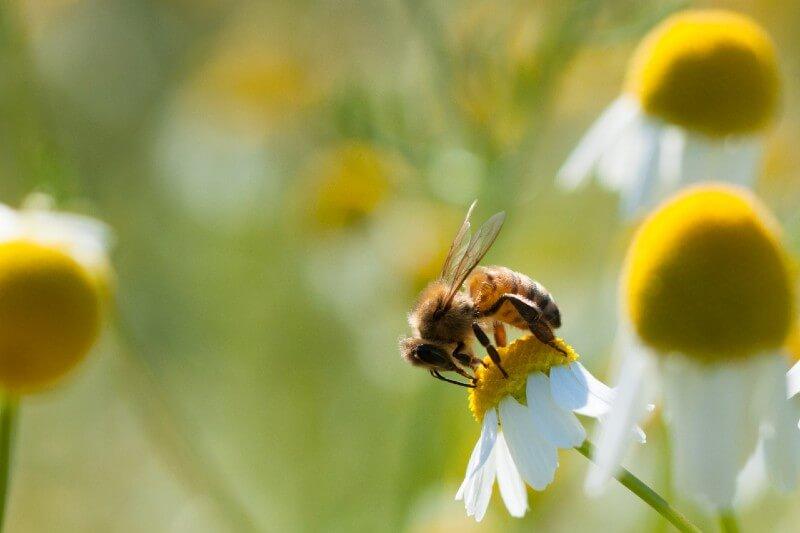 CE anuncia nuevas estrategias para la protección de la biodiversidad