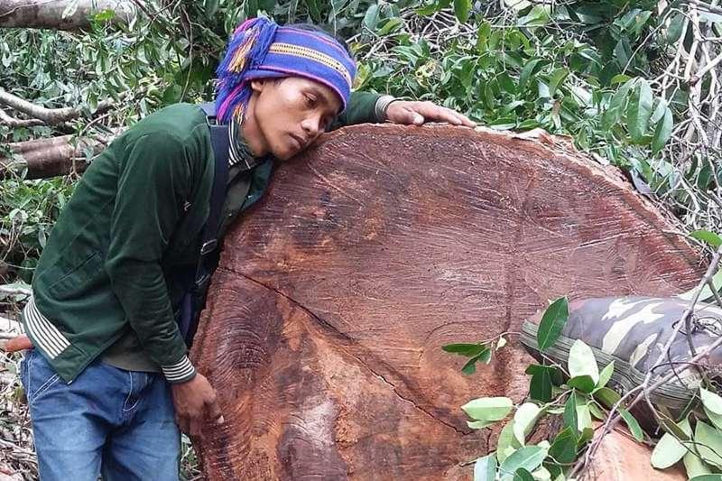 Defensores en Camboya denuncian aumento de deforestación durante la pandemia