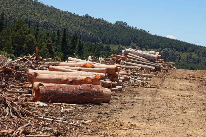 Disminuye la pérdida de bosques, pero irregularmente