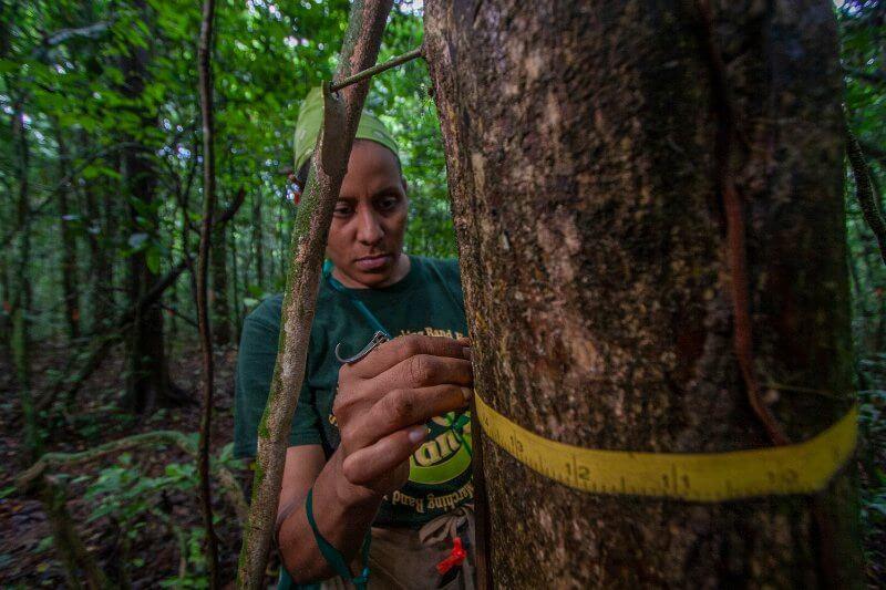Panamá estudia el futuro de los bosques