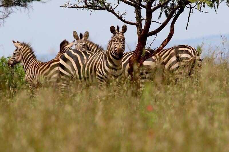 Nuevo programa busca proteger nuevas áreas naturales como patrimonio mundial en África