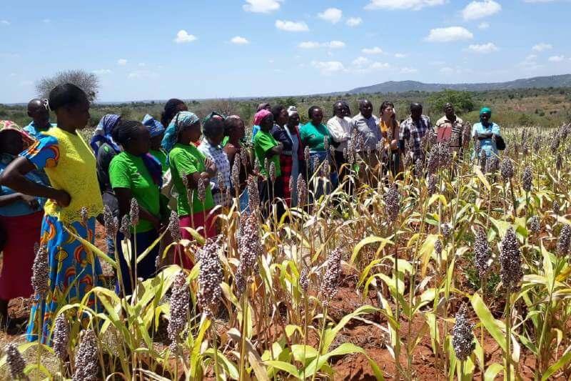 Una app que predice la sequía en áfrica