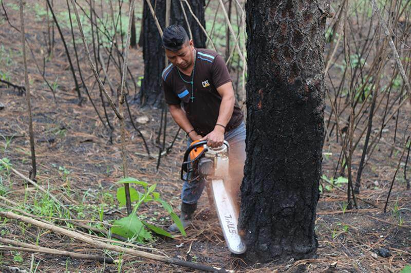 bosques se están reduciendo por coronavirus