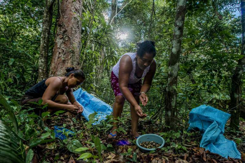 Comunidades en Guatemala protegen mejor los bosques