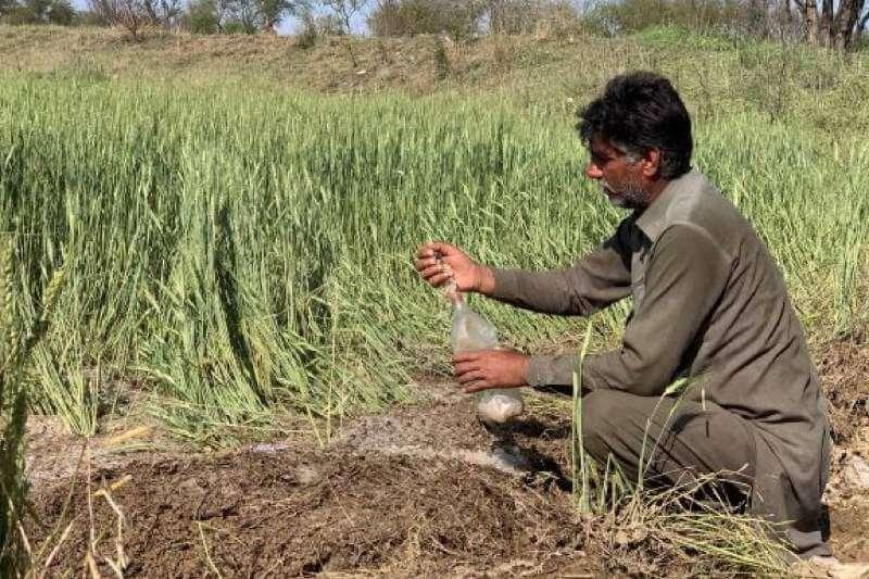 Escasez de trigo en Pakistán está llevando a la población a una crisis alimentaria