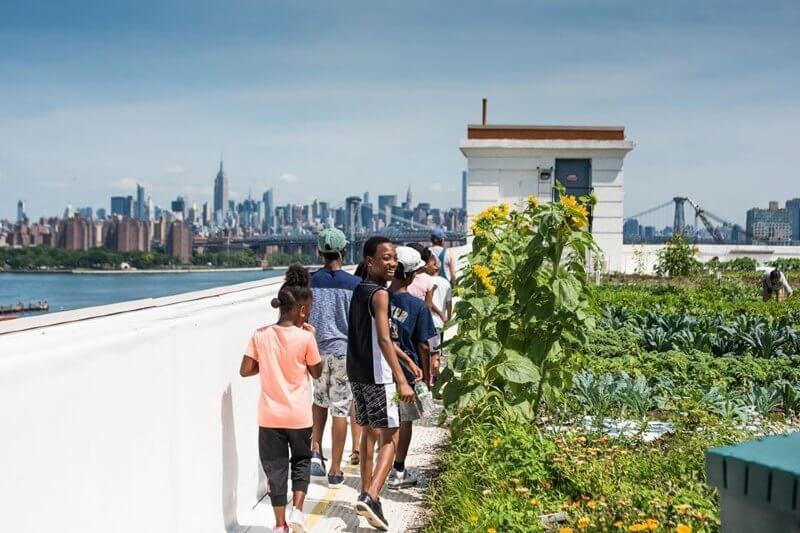Huerto urbano en Brooklyn es el más grande del mundo