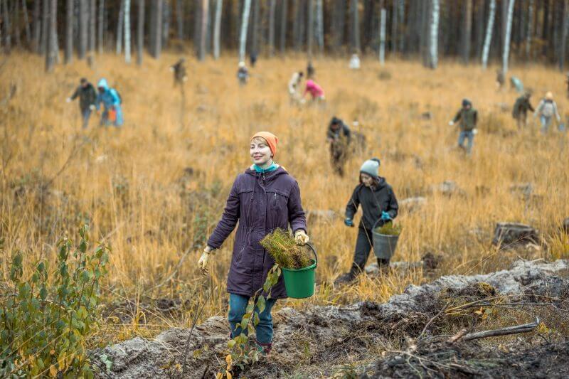 Plan de reforestación de Europa consiste en plantar más de tres millones de árboles para 2030