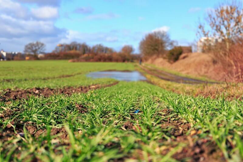 Plantas pueden absorber plástico de sus raíces